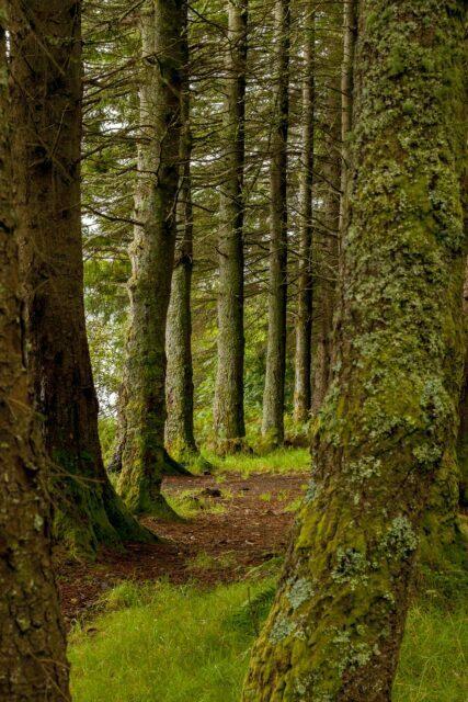 tree-3393831_1920